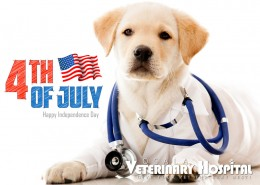 ocala-veterinary-hospital-4th-of-july